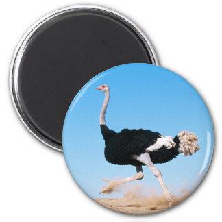 Running Ostrich Magnet