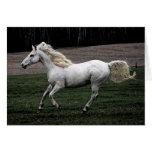 Running White Horse Note Card