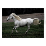 Running White Horse Stationery Note Card