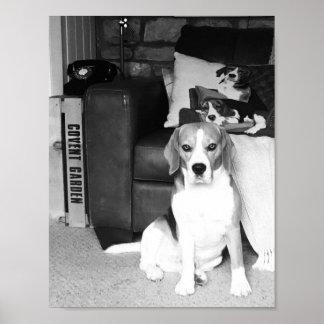 Rupert the Beagle Dog Black & White Poster