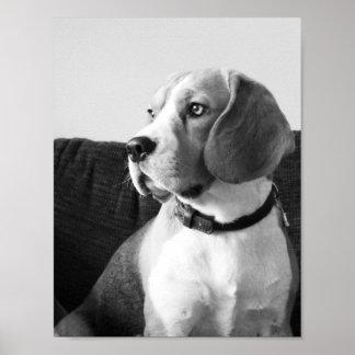 Rupert the Beagle Dog Poster