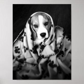Rupert the Beagle Puppy Dog Poster