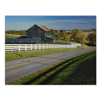 Rural road through Bluegrass region of 2 Postcard