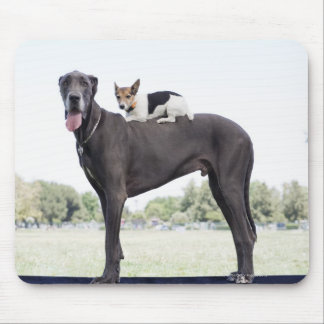 Russell terrier on great dane's back mouse pad