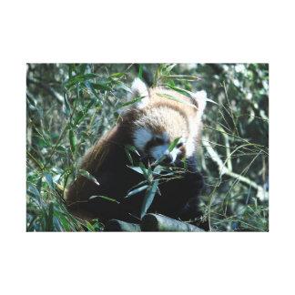 Russet-red panda canvas print