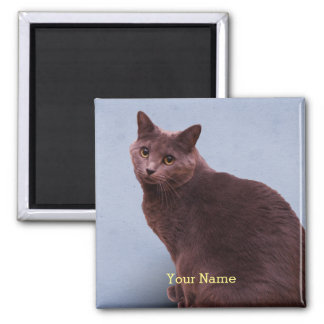 Russian Blue Cat Square Magnet