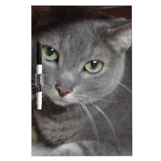 Russian Blue Gray Cat Dry-Erase Whiteboard