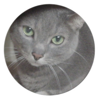 Russian Blue Gray Cat Plate