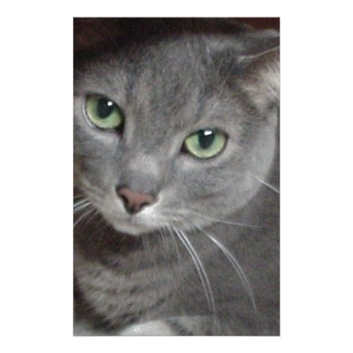 Russian Blue Gray Cat Personalized Stationery