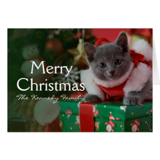 Russian Blue Kitten and Christmas Greeting Card