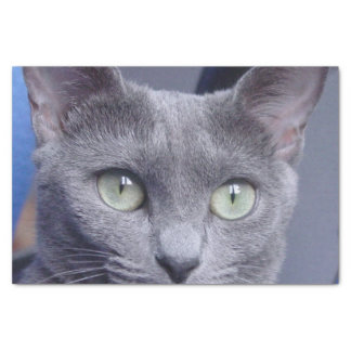 russian-blue.png tissue paper