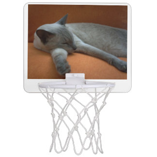 Russian_blue sleeping mini basketball hoop