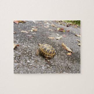 Russian Tortoise Intermediate Puzzle