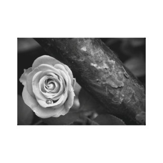 Rust & Rose Canvas Print