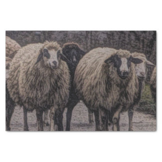 Rustic country road ranch farm herd of sheep tissue paper