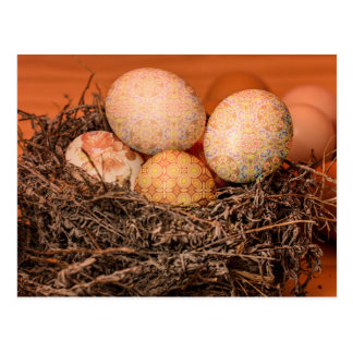 Rustic Easter eggs in nest Postcard