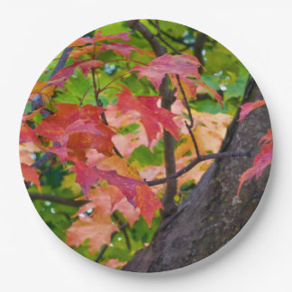 Rustic Fall Wedding Colours Autumn Foliage Photo 9 Inch Paper Plate