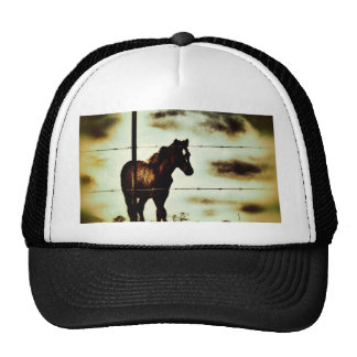 Rustic Horse Colt Foal and Barbed Wire Hat