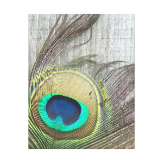 Rustic Peacock Feather Photograph Print