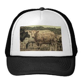 Rustic picture of cow in field mesh hat