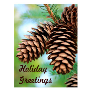 Rustic Pine Cones Postcard