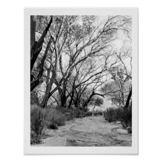 Rustic Trail with Trees Poster