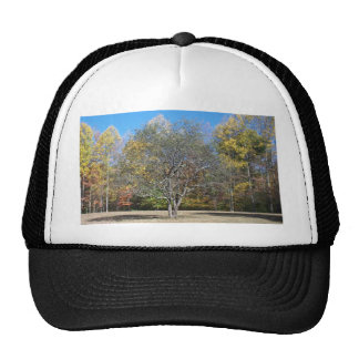 Rustic Tree & Blue Sky Trucker Hats