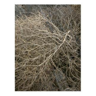Rustic Tumbleweed Postcard