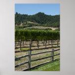 Rustic Vineyard Grape Fields Poster