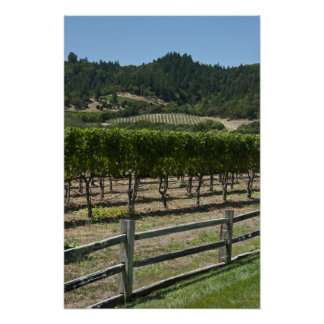 Rustic Vineyard Grape Fields Poster