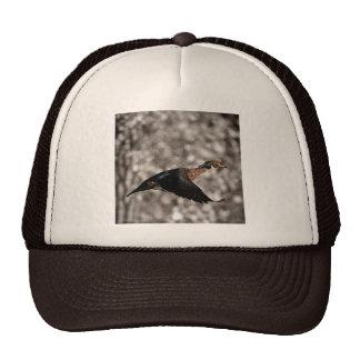 Rustic Vintage Flying Duck Hats