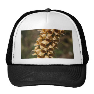 Rusty Foxglove (Digitalis ferruginea) Cap