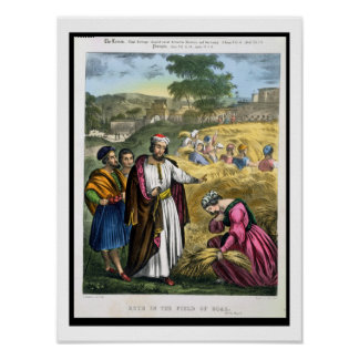 Ruth in the Field of Boaz, from a bible printed by Poster