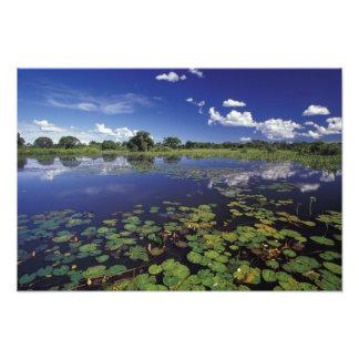 S.A., Brazil, Waterways in Pantanal Photo Print