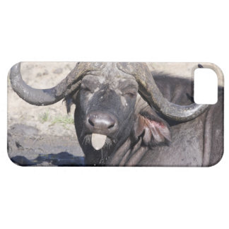 Sabi Sands Conservancy, Mpumalanga Province, 2 iPhone 5 Cover