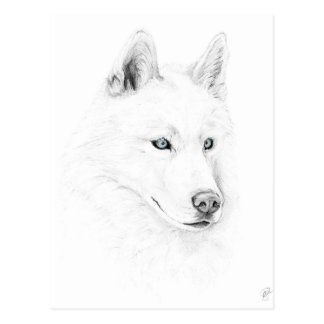 Sabre A Siberian Husky Drawing Art Blue Eyes Postcard