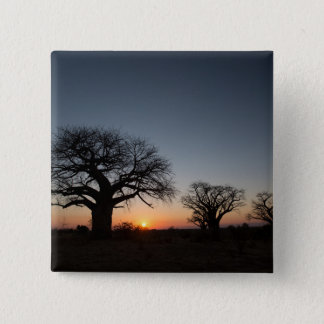 Sacred Baobabs 15 Cm Square Badge