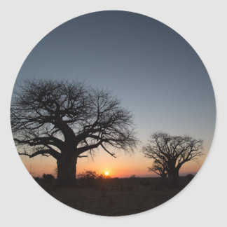 Sacred Baobabs Classic Round Sticker