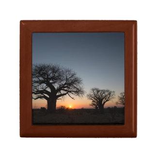 Sacred Baobabs Gift Box