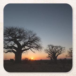 Sacred Baobabs Square Paper Coaster