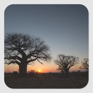 Sacred Baobabs Square Sticker