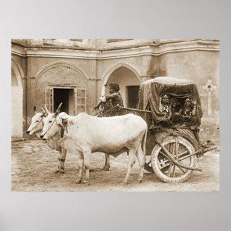 Sacred Bullocks Pulling Carriage of Nautch Girls Poster