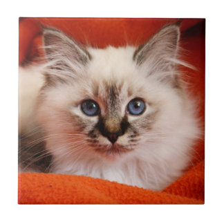 Sacred cat of Burma (Sacred Birman kitten) Small Square Tile