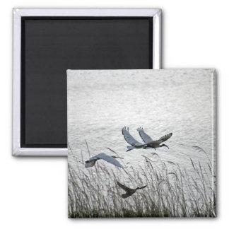 Sacred ibises in flight fridge magnets