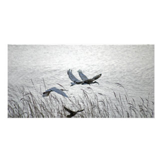 Sacred ibises in flight picture card