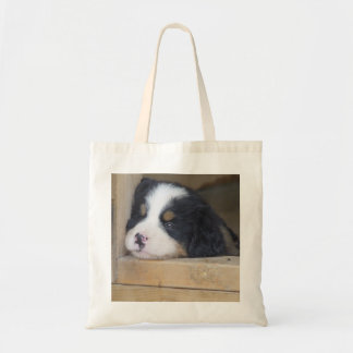 Sad Bernese Mountain Dog Puppy