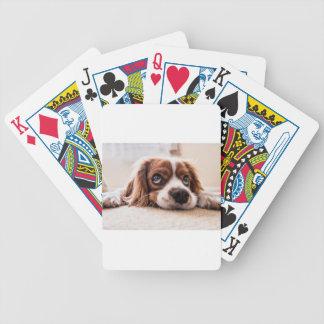 Sad Canine Dog Bicycle Playing Cards