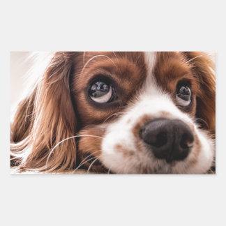 Sad Canine Dog Rectangular Sticker