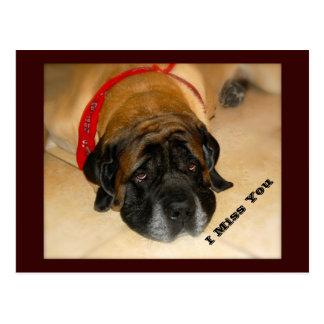 Sad English Mastiff Dog I MIss You Postcard