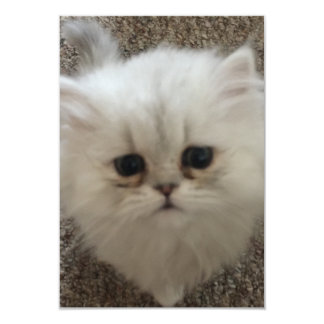 Sad eyes white fluffy kitten looking up card